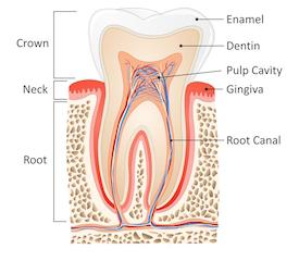 Van Nuys Root Canals | Saticoy Plaza Dentistry